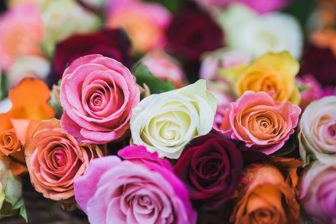 The Meaning of Roses by Numbers